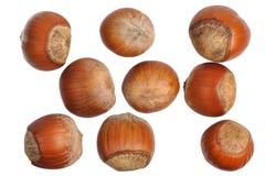 Hasselnötter som isoleras Arkivfoto