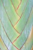 A haste da banana funde a textura do fundo Imagem de Stock Royalty Free