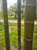Haste do bambu imagem de stock royalty free