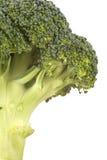 Haste fresca dos bróculos Imagens de Stock Royalty Free
