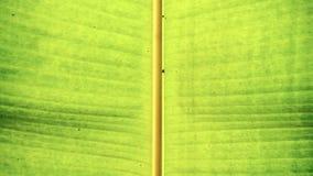 Haste verde da folha Imagem de Stock