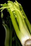 Haste verde orgânica do fim do aipo acima Fotografia de Stock Royalty Free