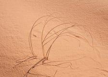 Hastes da grama selvagem com o molde de folhas do corkscrew suas sombras através das dunas de areia em Utá do sul imagens de stock