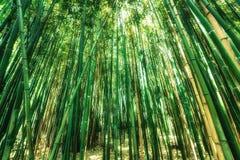 Hastes de bambu verdes Foto de Stock Royalty Free