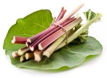 Hastes do Rhubarb. Imagens de Stock