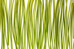 Hastes verdes Imagens de Stock Royalty Free