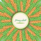 Hastes verdes do trigo Bandeira do vetor Ornamento circular com ponto Fotos de Stock