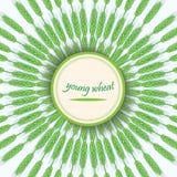 Hastes verdes do trigo Germe de trigo novo Bandeira do vetor Ornamento circular com ponto Fotografia de Stock Royalty Free