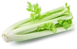 Hastes verdes frescas da folha do aipo Imagem de Stock Royalty Free