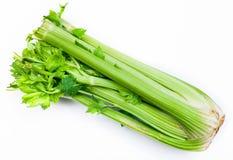 Hastes verdes frescas do aipo no branco Fotos de Stock