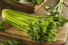 Hastes verdes orgânicas cruas do aipo Fotos de Stock Royalty Free