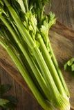 Hastes verdes orgânicas cruas do aipo Imagens de Stock Royalty Free