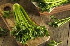 Hastes verdes orgânicas cruas do aipo Fotografia de Stock Royalty Free