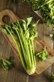 Hastes verdes orgânicas cruas do aipo Imagem de Stock Royalty Free