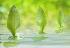 hastig leafsegling Fotografering för Bildbyråer