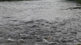 Hastighet av den Ibar floden