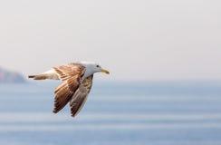 Hastighet i havet Arkivbild
