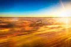 Hastighet och snabb rörelse med australisk vildmark som bakgrund Arkivbilder