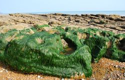 Hastings beach, England Stock Photos