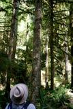 Hat. Man looking up at the trees, Washington State, USA Royalty Free Stock Image
