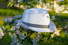 Hat on a branch in the garden. White hat on a flowering branch Stock Photo