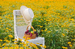 Hat on chair in yellow daisies Royalty Free Stock Photography