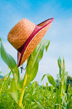 Hat on the corn Stock Image