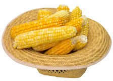 Hat with corn. Grain  white  hat  corncob  summer  cob  closeup  isolated  produce  nobody  natural Royalty Free Stock Photography