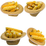 Hat with corn. Grain  white  hat  corncob  summer  cob  closeup isolated  produce  nobody  natural Royalty Free Stock Photo