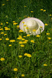 Hat dandelion meadow Stock Photography