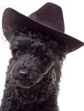 Hat Dog Royalty Free Stock Photos