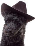 Hat Dog Royalty Free Stock Photos