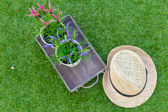Hat with flower on the field of green grass Stock Photography