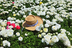 The hat and  flowers Stock Photo