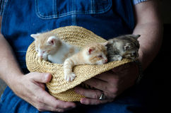 Hat full of kittens Royalty Free Stock Images