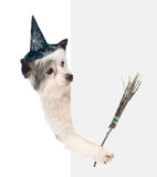 with hat for halloween and with witches broom stick. isolated on white Stock Images