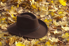 Hat on the leaves Stock Photos