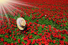 The hat with a ribbon on  red flowers Royalty Free Stock Photo