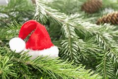 Hat of Santa Claus on Christmas tree branches Royalty Free Stock Photos