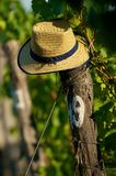 Hat on vineyard Royalty Free Stock Images