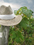 Hat in the Vineyard. A hat on a post in a vineyard Stock Photography