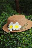 Hat with white plumeria flower stock images