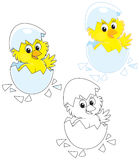 Hatched Chick. Little yellow chick looking out of an egg vector illustration