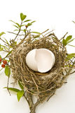 Hatched Egg in Bird's Nest Stock Images