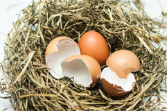 Hatched egg. On Straw in farm Stock Photos