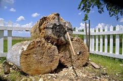 Hatchet thrown into end of logs Royalty Free Stock Photos