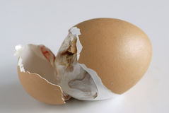 Hatching 5. The egg is broken by chicken Royalty Free Stock Photos