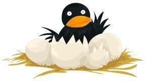 Hatching bird Stock Image