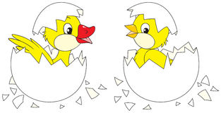 Hatching chick and duckling Stock Photo