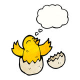Hatching chick with thought bubble Stock Photo